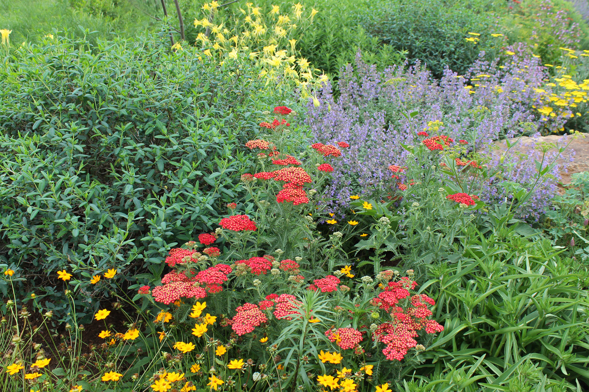 photo of a flower garden for pollinators