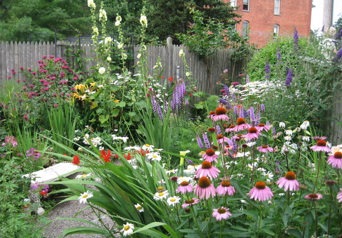 Where to Buy Native Plants - Jersey-Friendly Yards