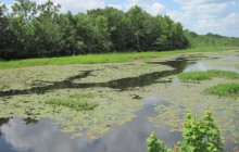 Lake Eutrophication, Elmer NJ photo by Rutgers Cooperative Extension of Salem County
