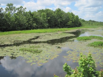 A lake harmed by excessive algae and plant growth in Elmer, NJ. Photo by Rutgers Cooperative Extension of Salem County