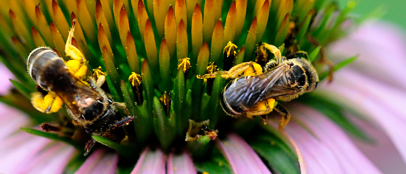 Landscaping for Pollinators - Jersey-Friendly Yards on native plant garden, native wildflower garden, native perennial garden, native bee habitat,