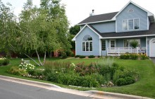 thumbnail photo of rain garden