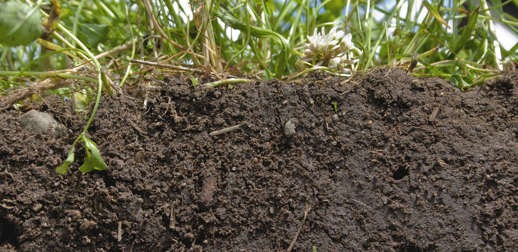 photo of healthy soil and soil health