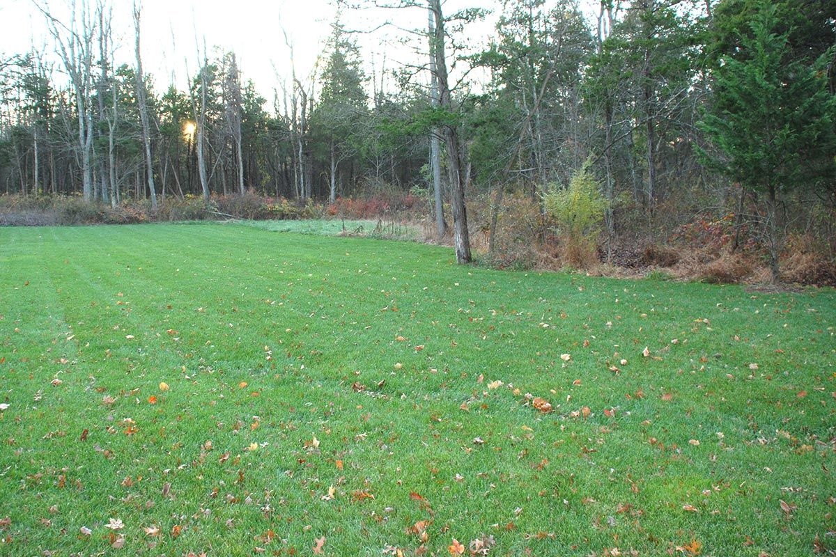 photo of lawn area