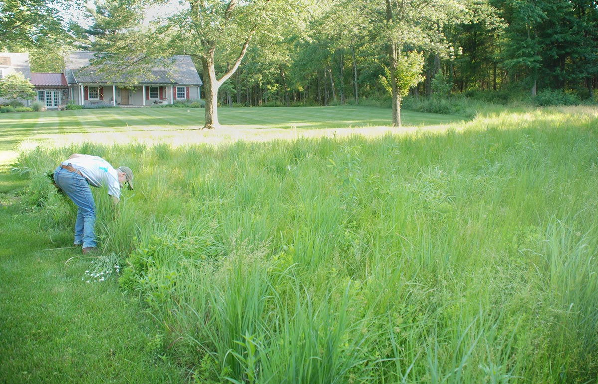 photo of native meadow grasses at new jersey home.