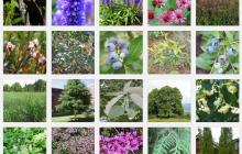 Plant database image