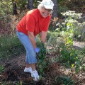 Jakes-Branch-native-garden-volunteer-by-Becky-Laboy-web