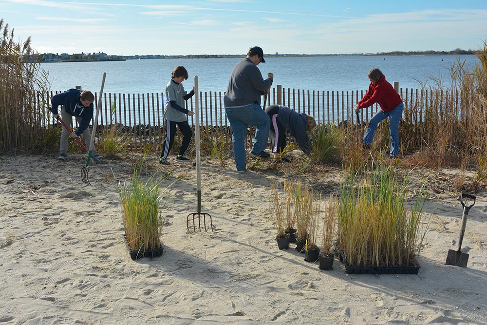 native grass plantings at bay head shores along barnegat bay in point pleasant, nj